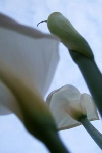 fleur21