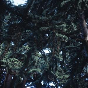 arbre légendaire